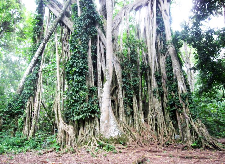 ghanaforest